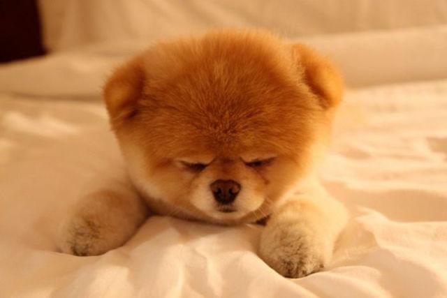 Cómo se contagia el coronavirus en perros