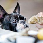 tratamiento de la anorexia en perros