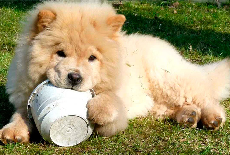 urolitiasis en perros