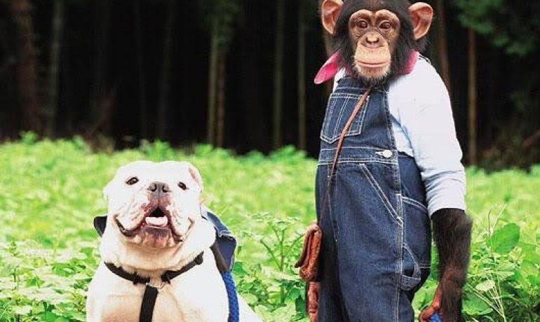 El mono Pankun y su perro James