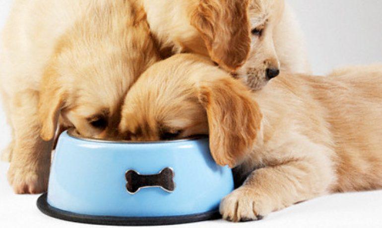 Qué errores no debes cometer al alimentar a un perro