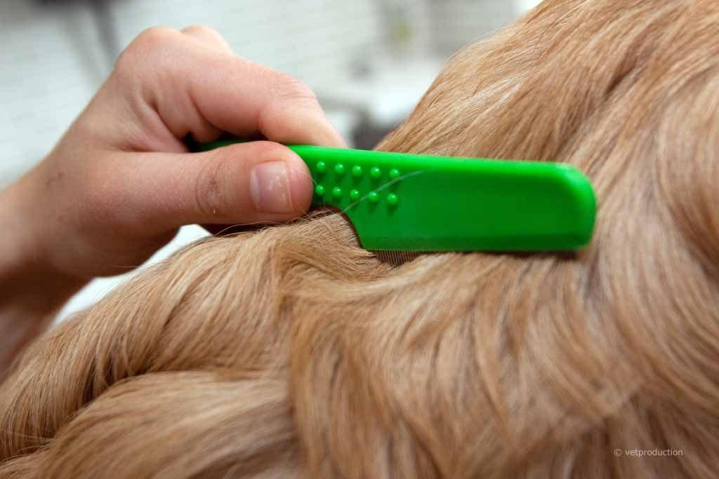 A mi perro se le cae el pelo