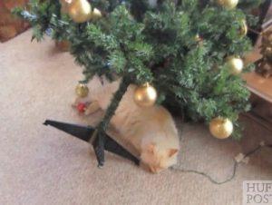 adios navidad