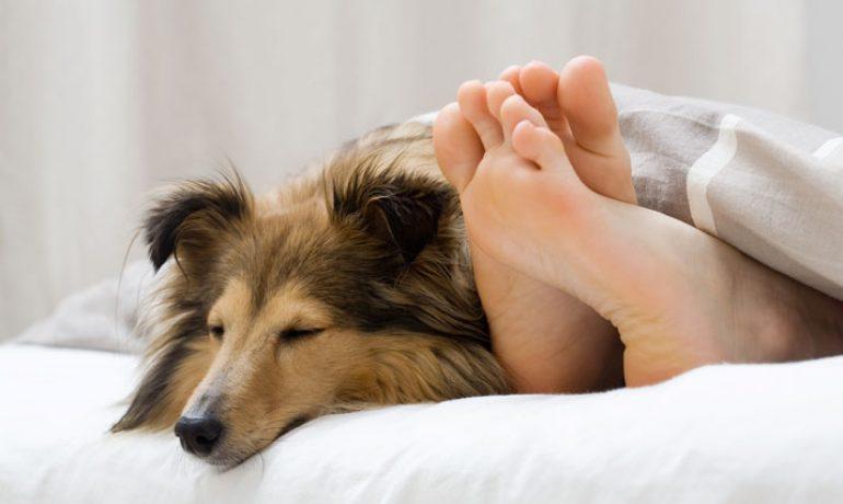 adoptar a un perro te ayudará a dormir