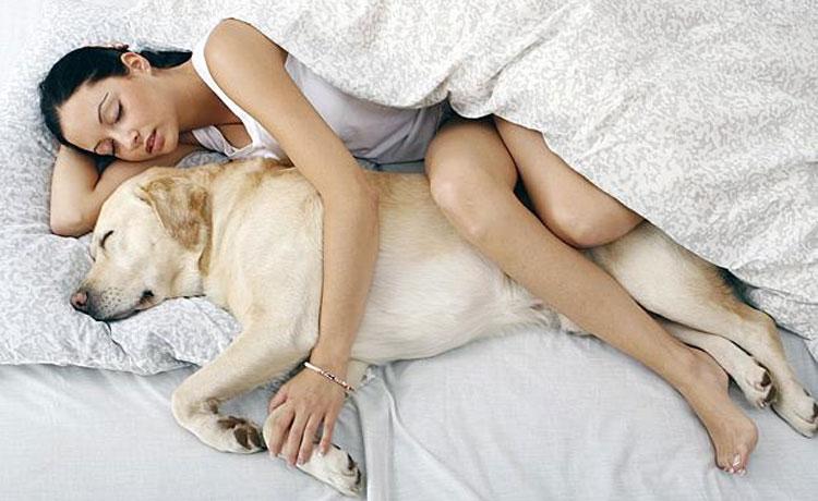 Adoptar a un perro te ayudará a dormir mejor