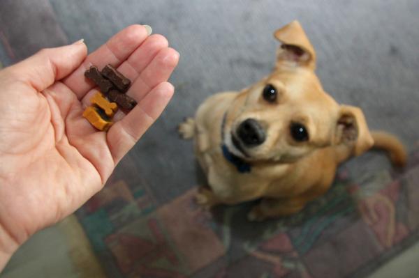 Alimentos para cuidar los dientes de tu perro