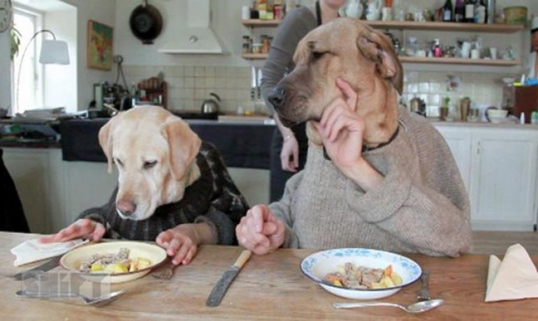 animales humanizados