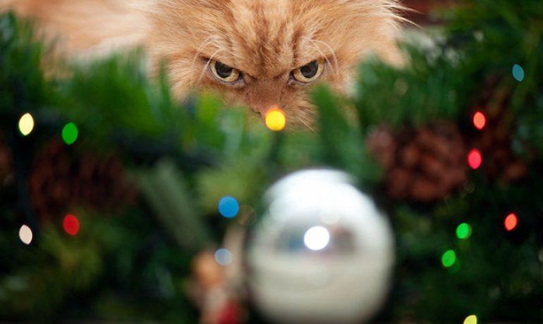 mascotas en navidad