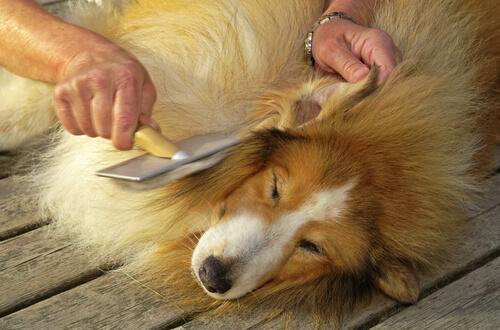 Cómo desenredar el pelo de un perro fácilmente