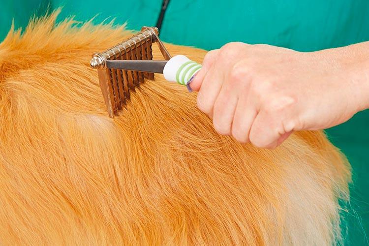 Cómo desenredar el pelo de un perro