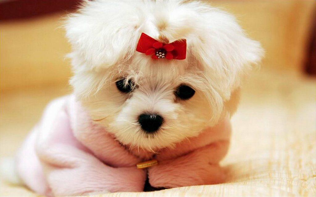 Cómo elegir a un buen psicólogo canino