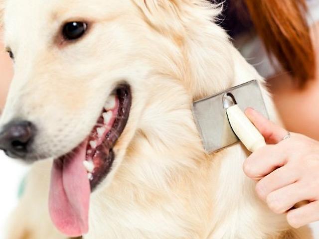 Cómo hacer para que el pelo de mi perro brille