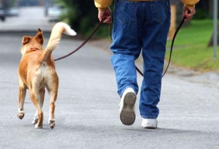 Cómo pasear a un perro