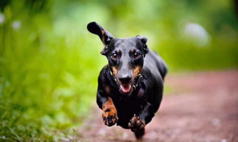 como adiestrar a mi perro para pasear sin correa