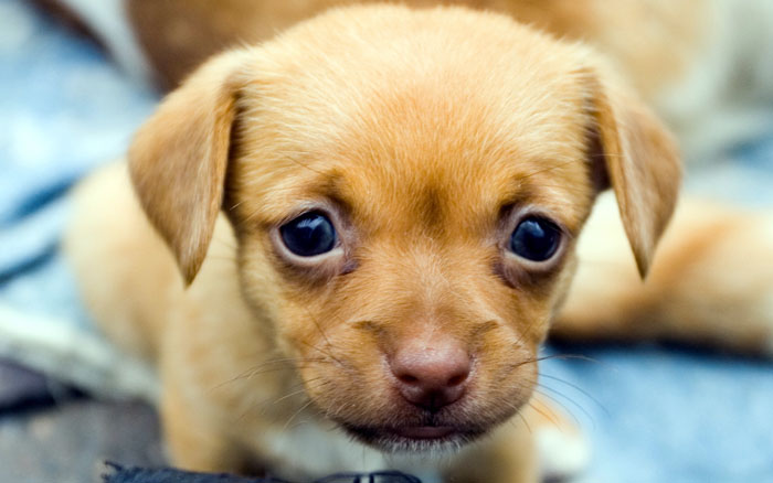 Cómo reanimar a un cachorro recién nacido