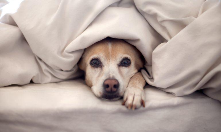 Consejos para cuidar mejor de tu perro en invierno