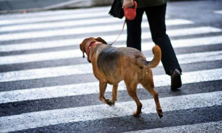 Consejos para enseñar a un perro a cruzar la calle