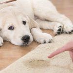 Consejos para evitar que los perros orinen en casa