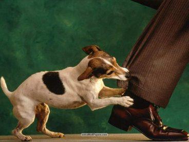 Consejos para evitar que un perro me ataque