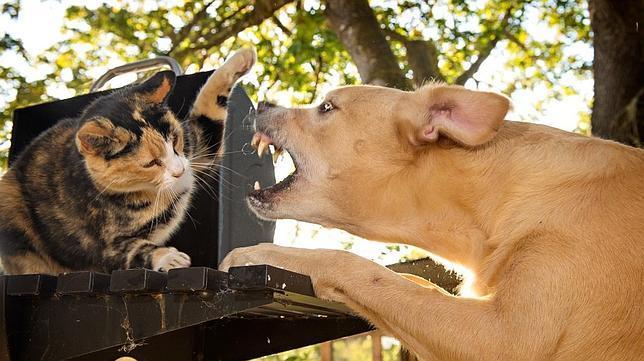 consejos para controlar los ladridos de tu perro
