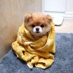 Cuándo se puede bañar a un cachorro