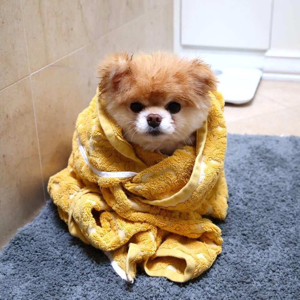 Cu ndo se puede ba ar a un cachorro todo sobre la - Cuando se puede banar a un perro ...