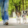 Descubre por qué debes sacar a tu mascota diariamente