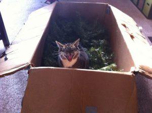gato arbol de navidad