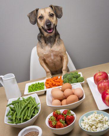Es bueno para los perros mezclar la dieta BARF con pienso