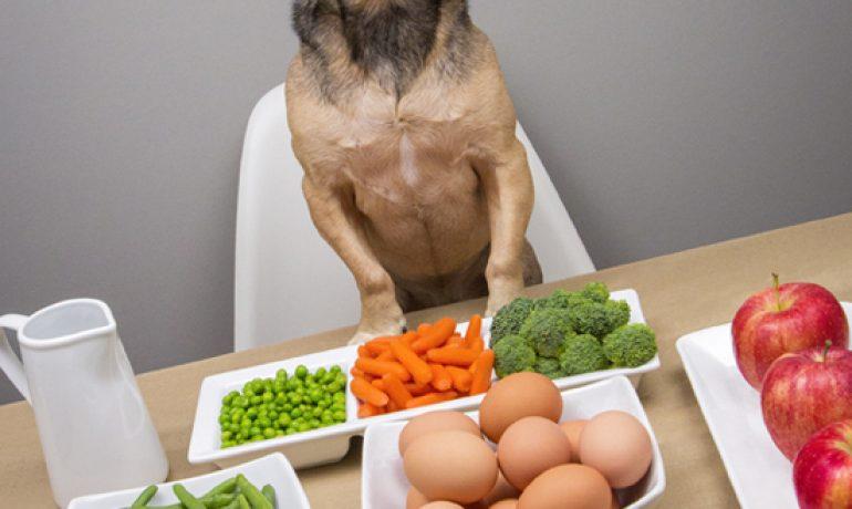 dieta barf para perros es buena