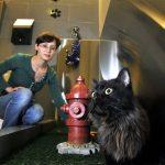 gato bano aeropuerto