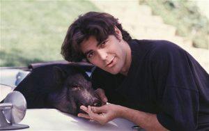 george clooney cerdo