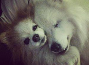 hoshi y zen durmiendo