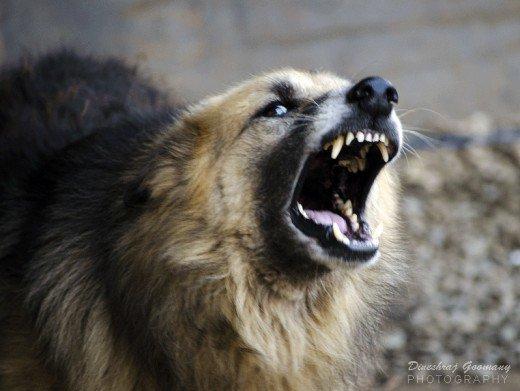 La rabia en perros se puede tratar