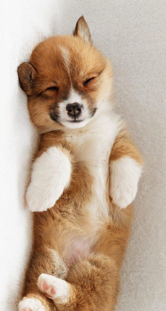 La tos de las perreras tiene tratamiento