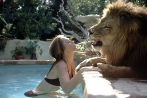 leon mascota