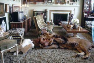leon mascota casa