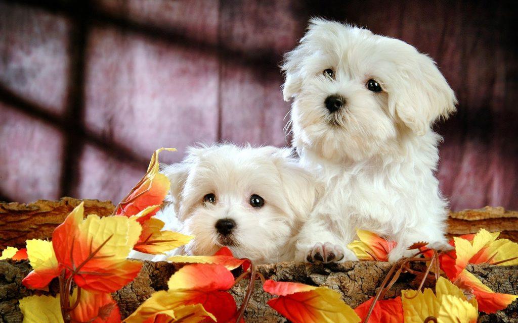 mejores razas de perros para gente muy ocupada