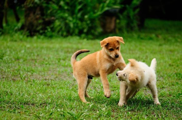 Mi perro monta a otros perros por dominancia