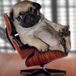 mi perro necesita un psicólogo