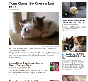 new york times gatitos