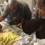 perra se despide de dueño en hospital