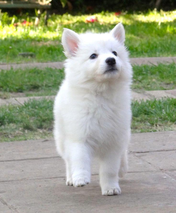 Perros albinos y perros blancos