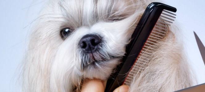 Por qué a mi perro se le cae el pelo