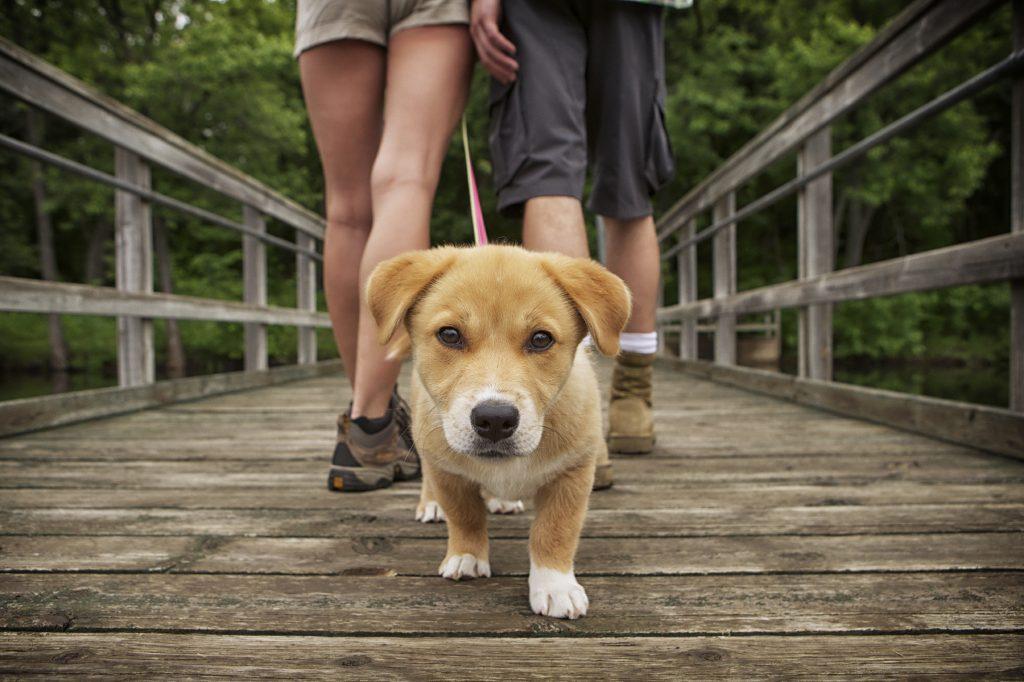 Por qué debes sacar a tu mascota diariamente
