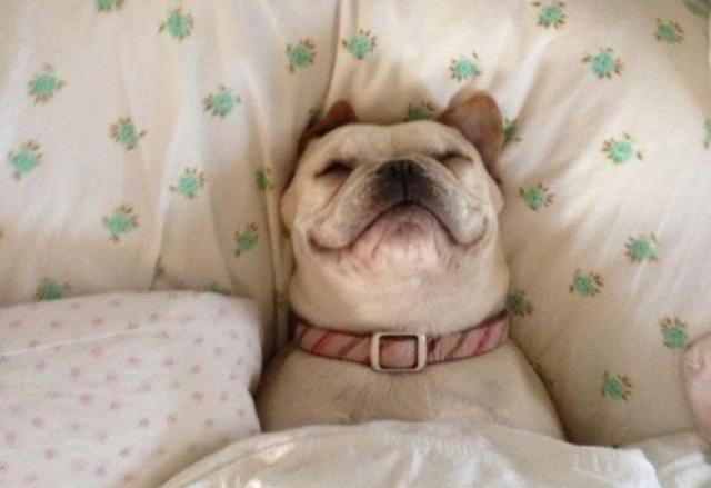 Por qué mi perro duerme tanto