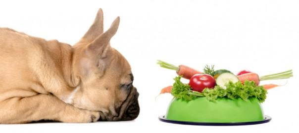Puede ser mi perro vegetariano