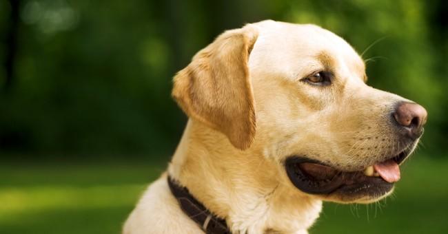 Qué actividades puedo hacer con perros ancianos