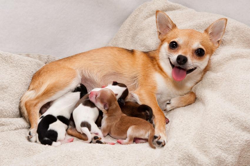 que debes hacer con un cachorro recién nacido