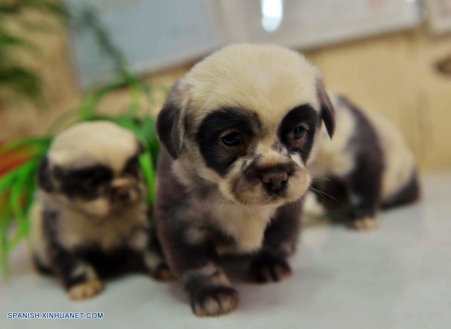 qué hacer con un cachorro que acaba de nacer